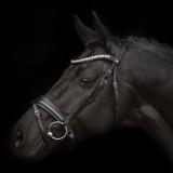 SD Mystery trense Sort med sort forring og glitter lak på hest