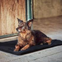 Fir Tech Pro tæppe til hund