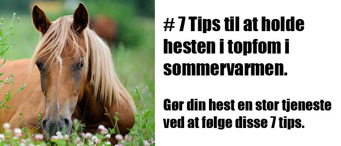 7 tips til at holde hesten i topform i sommervarmen